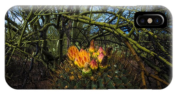 Barrel Cactus In Bloom 3 IPhone Case