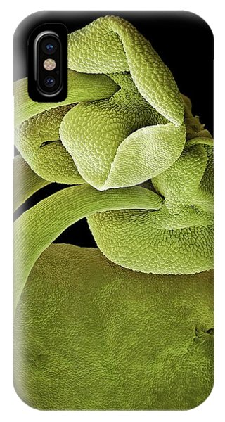 Stamen iPhone Case - Basil Stamens by Stefan Diller/science Photo Library