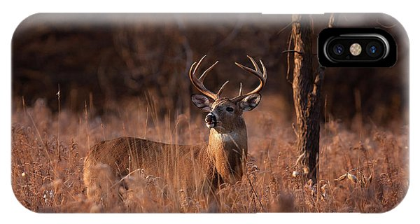 Basking In The Light - White-tailed Buck Phone Case by Jim Cumming