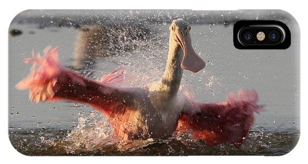 Bath Time - Roseate Spoonbill IPhone Case