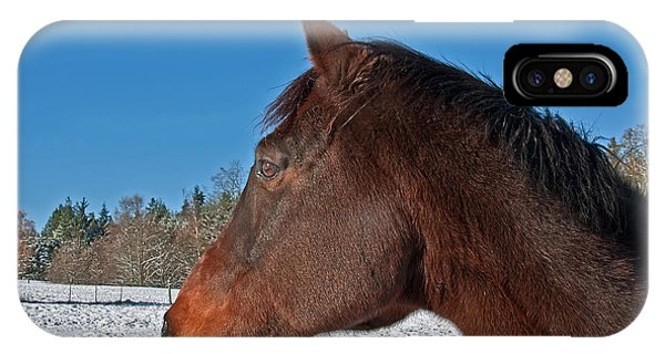 Bay Thoroughbred Horse Side View In Winter IPhone Case