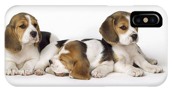 Beagle Puppies, Row Of Three, Second IPhone Case
