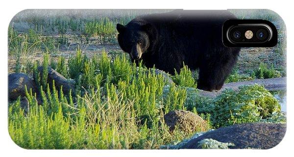 Bear 3 IPhone Case