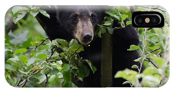 Brian Rock iPhone Case - Bear Cub In Tree by Brian Rock