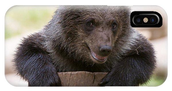 Bear Cub IPhone Case