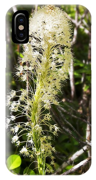 Bear Grass No 3 IPhone Case