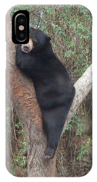 Bear In Tree   IPhone Case