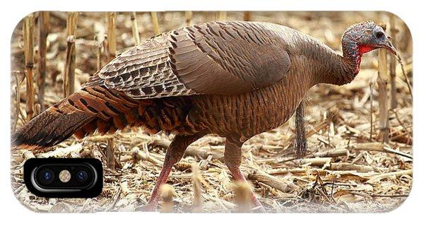 Bearded Wild Turkey Hen IPhone Case