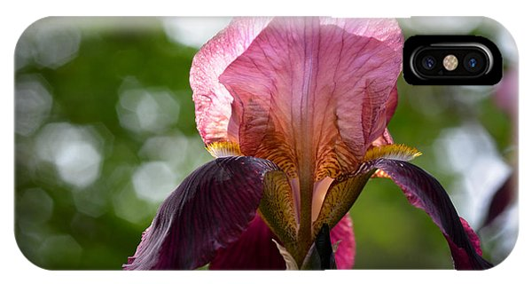 Bearded Iris Aglow IPhone Case
