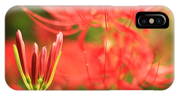 Beautiful Amaryllis Flower Red Spider Lily Aka Resurrection Lily IPhone Case