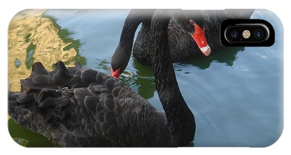Beautiful Black Swans IPhone Case