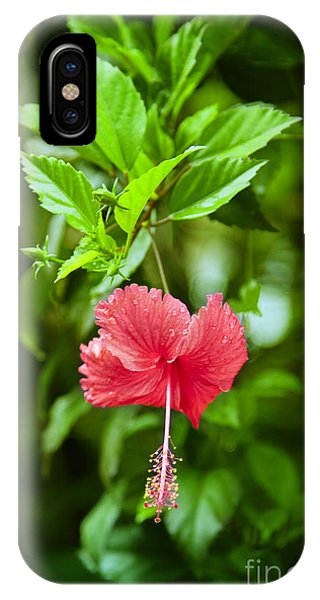 Tropes iPhone Case - Beautiful Blossom by Gina Koch