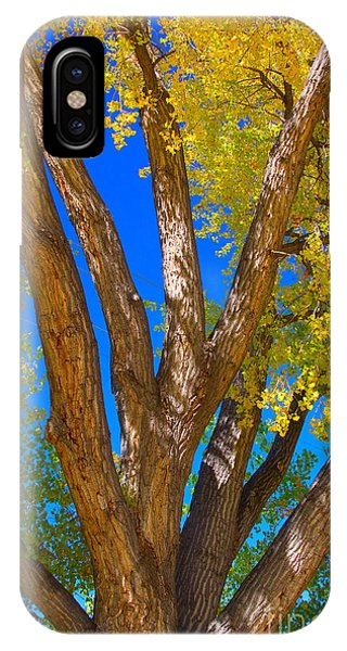 Beautiful Blue Sky Autumn Day IPhone Case