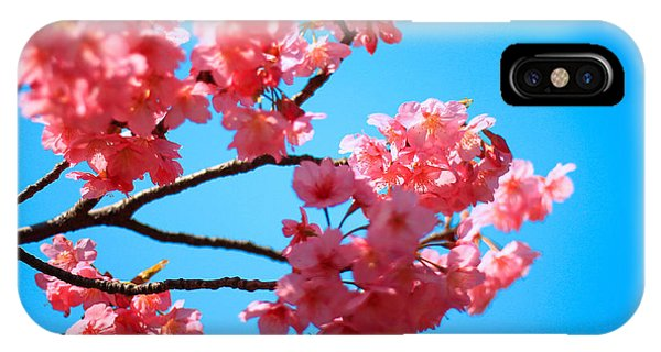 Beautiful Bright Pink Cherry Blossoms Against Blue Sky In Spring IPhone Case