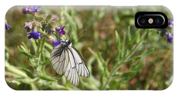Beautiful Butterfly In Vegetation IPhone Case
