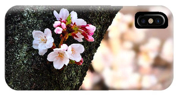 Beautiful Cherry Blossoms Blooming From Tree Trunk IPhone Case