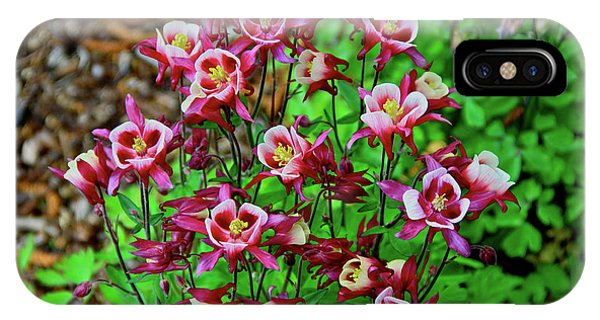 Beautiful Columbine   IPhone Case