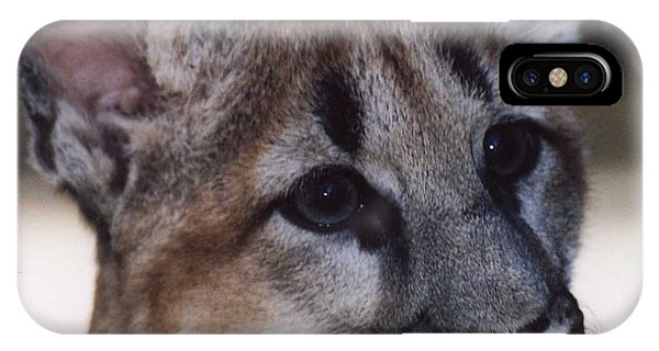 Beautiful Face-cougar Cub IPhone Case