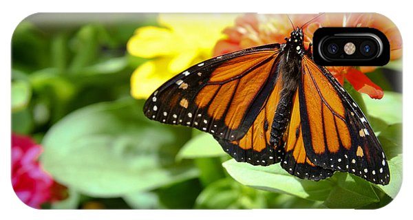 Beautiful Monarch Butterfly IPhone Case
