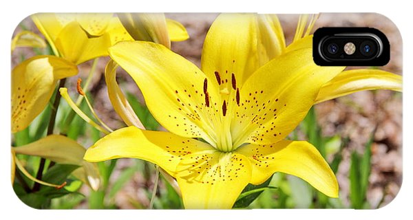 Beautiful Open Yellow Lily IPhone Case