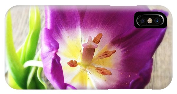 Beautiful iPhone Case - Beautiful Purple Flower From Above by Matthias Hauser