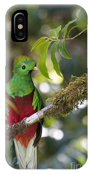 Beautiful Quetzal 1 IPhone Case