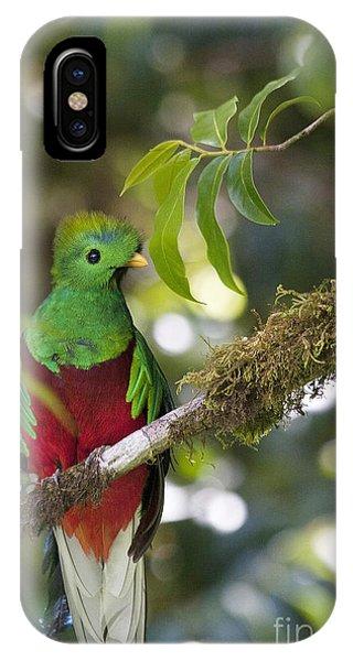 Beautiful Quetzal 1 IPhone Case