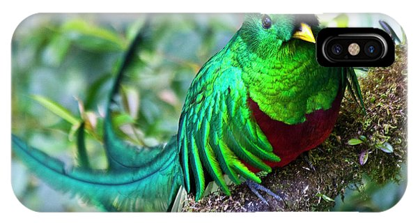 Beautiful Quetzal 4 IPhone Case