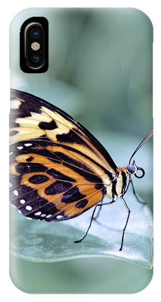 Beautiful Red Cracker Butterfly IPhone Case