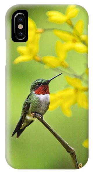 Beautiful Summer Hummer IPhone Case