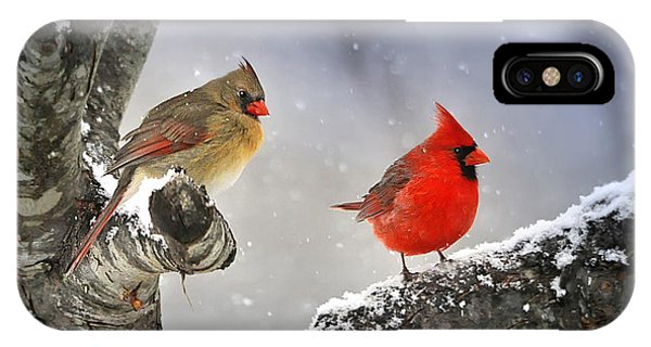 Avian iPhone Case - Beautiful Together by Nava Thompson