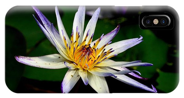 Beautiful Violet White And Yellow Water Lily Flower IPhone Case