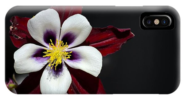 Beautiful White Petal Yellow Stamen Purple Shades Aquilegia Columbine Flower IPhone Case