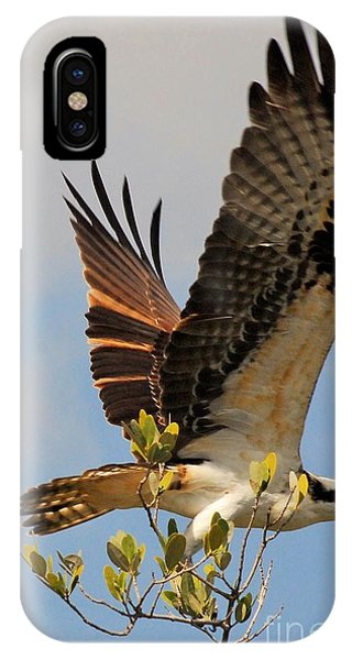 Ospreys iPhone Case - Beautiful Wings by Quinn Sedam