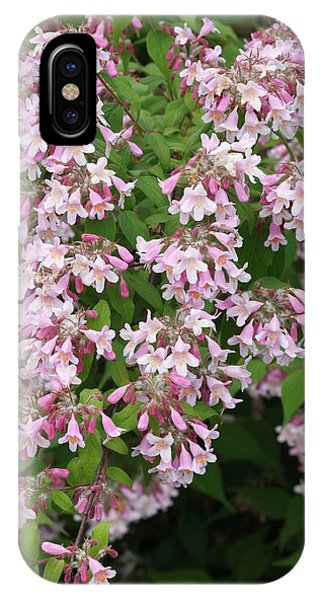Deciduous iPhone Case - Beauty Bush. by Geoff Kidd/science Photo Library