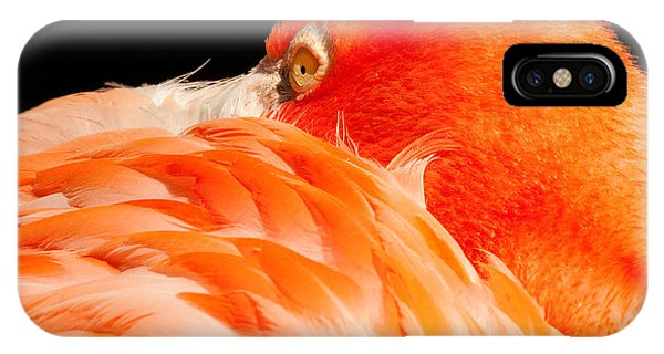 Beauty In Feathers IPhone Case