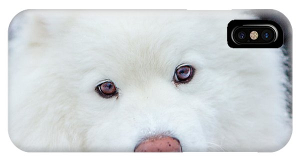 Beauty Of The Samoyed IPhone Case