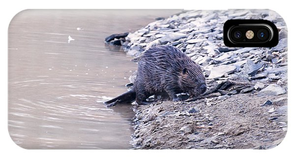 Beaver On Dry Land IPhone Case