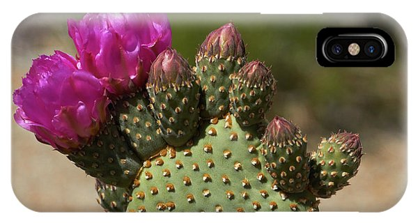 Beavertail Cactus In Flower, Found Only Phone Case by David Wall