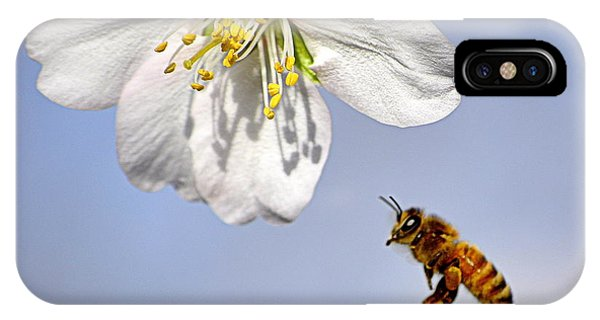 Bee And The Almond Blossom IPhone Case