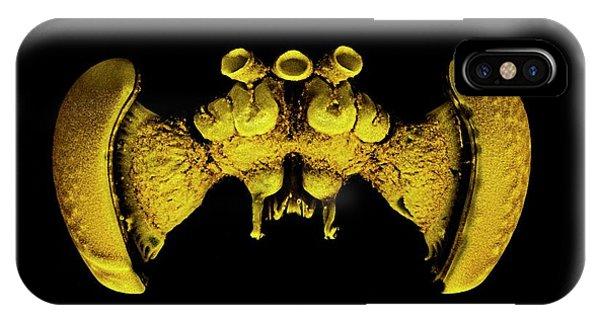 Brain Scan iPhone X Case - Bee Brain by Dan Sykes/natural History Museum, London