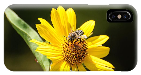 Bee Flower IPhone Case