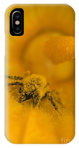 Bee In Pollen IPhone Case