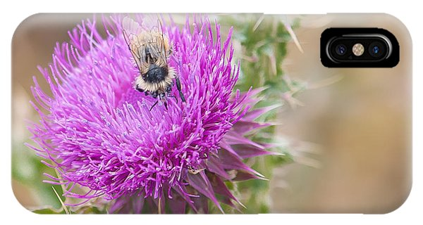 Bee On A Thistle Flower IPhone Case