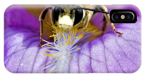 Kingsville iPhone Case - Bee On An Iris  by Lee Ann Stamm