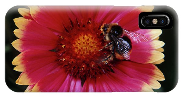 Pollination iPhone Case - Bee Pollinating Gaillardia Flower by Science Photo Library