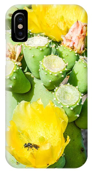 Bee Visits Cactus Blossom Phone Case by Wally Taylor