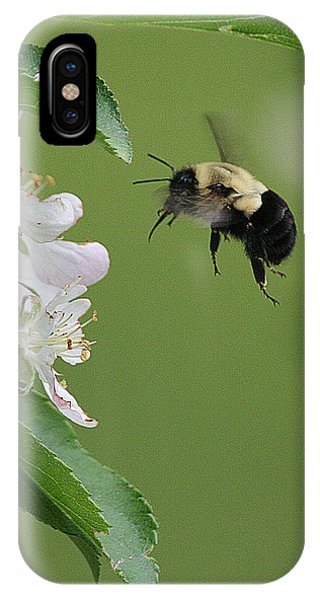 Bee With Apple Blossoms IPhone Case