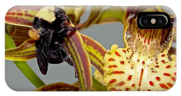 Bee With Pollen Sac On Its Back IPhone Case