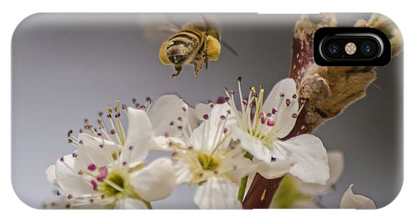 Bee Working The Bradford Pear 2 IPhone Case